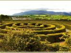 Castlewellan maze with the Great Mournes behind