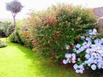 beautiful Garden in bloom