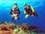 Atlantis Diving Centre, organises scuba diving excursions and it's next to you!