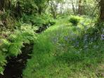 Shallow stream running through garden and woodland
