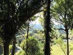 Nikau palm grove with Rock Retreat.