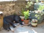 Jacques, guardian of Earthsky, enjoys a well earned rest on my terrace.