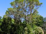 alberi del giardino