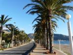 Palm Lined Promenade