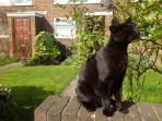 Our neighbourhood cat, 'Teddie Cat' outside the house, waiting to catch a sea gull.