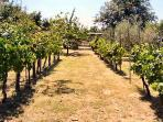 Enjoy the garden, vines, olive & fruit trees