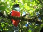 explore the rainforest and see the fabulous Trogon