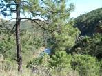 Walk through the trees above Rio Guadalmina.......