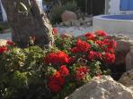Many lovely flowers in the courtyard