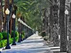 Avenue of palms Alicante Botanical Gardens 45 minutes by car