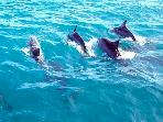Dolphins Trips on the area
