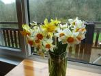 Daffodils picked form our Valley in Spring