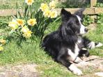 Dogs are welcome - they love the beach, forest and hill walks the area has to offer