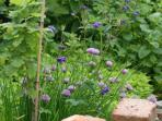 Our herby garden - feel free to help yourselves