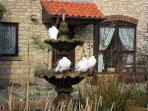 Courtyard centre flower bed with fountain and doves,