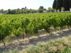 The village of St Genies de Fontedit is surrounded by vineyards with the 14th C church at its centre