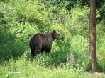 The Dancing Bears Park,in the Rila Mountains, Belitsa, provides a natural habitat for rescued bears.
