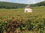 les vignes autour du village