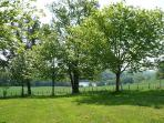 View of lake from our chestnut field.