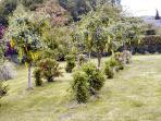 Part of 1/2 acre garden