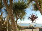 Seafront palm trees