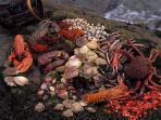 Esta zona es famosa por sus buenos vinos albariños y  gastronomia rica en carnes,pescados y marisco.