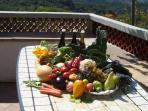 Vegetables and fruits of the kitchen garden  for free.