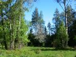 unsere Waldwiese (Ausschnitt)
