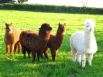 You'll have some alpaca neighbors!!