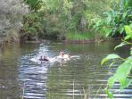 Pond swimming at The Gates Accommodation.A child's paradise. And contemplation.