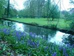 rivière dans le parc