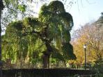Pamplona verde. Parque de La Taconera.6