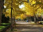 Pamplona verde. Parque de La Taconera.7