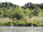 quelques oiseaux sur l'étang
