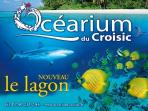 Visit the Océarium Croisic
