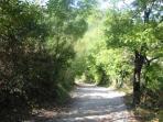 Strada che porta all'agriturismo Colleciglio