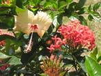 Some of the exotic garden plants