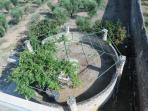 Ingegna(sopraelevato pozzo:1sistema idraulico a forza animale sollevava/accumulava acqua irrigazione