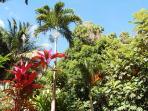 Jardin Mangoplaya.