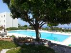 Pool from the Carob Trees.  Lots of shaded areas for you to relax and wonder around.