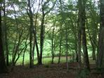 Gite Regrunel woods