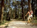 Cycle track in the 'Pignada Forest' 200ms away