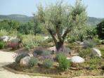 Jardin du Mas de Molines