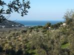 Olive groves to be found in the middle of the Eden of Pechici.