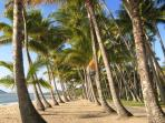 Fantastic Palm trees to stroll under.