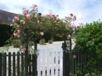 Roses around the pool gate