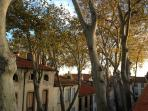 Plane trees from the terrace