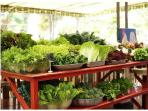 Organic Flora Farm for eating or buying veggies.