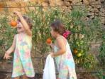 Recogiendo tomates de la huerta