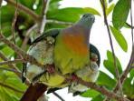 Kumarakom bird santuary.